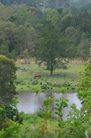 Capers Guest House: View from the verandah