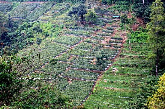 Bandung, Indonesia: Vegetable Plantation in Dago Pakar