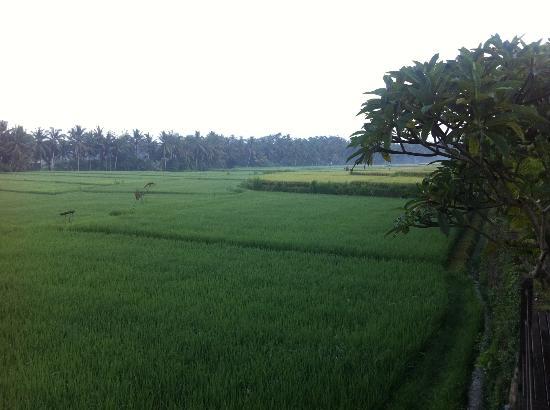 Bali Harmony Villas: Rice paddie view from room