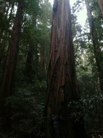 Big Basin Tent Cabins: trail to berry creek