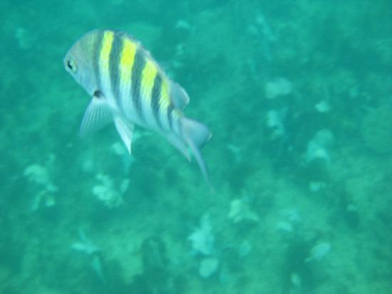 Armacao Beach: Snorkel