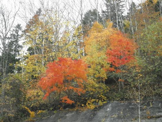 Teshikaga-cho, Japan: 遅い紅葉、でも色は綺麗でした