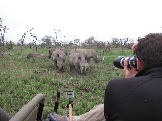 Rattray's on MalaMala: Rhinos up close.
