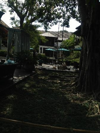 137 Pillars House: my favourite banyan tree.. another great place to relax and be calm.