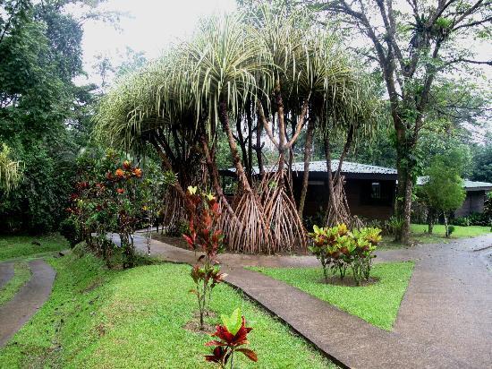 Chachagua Rainforest Eco Lodge: Gorgeous landscape