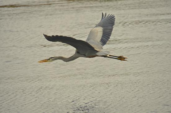 Blue Heron River Tours: In flight