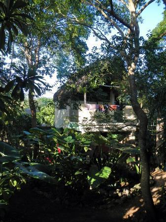 Genesis Eco-Oasis: Sweet garden retreat