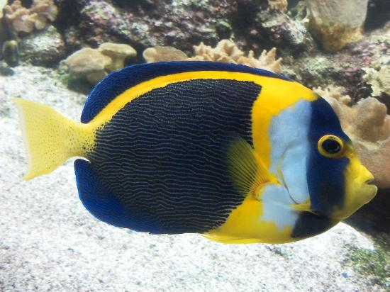 Aquarium La Rochelle : Poisson
