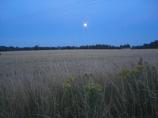The Sutton Plough: View across the fields to the rear