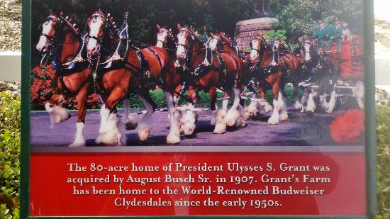 Grant's Farm: Interesting Information on Clydesdales