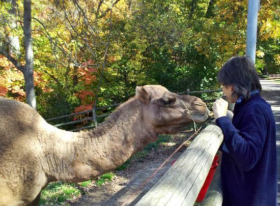 Grant's Farm : Camel