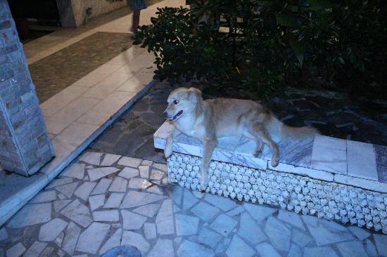 Mar & Oro: one of the owner's dogs, at the entrance of the hotel