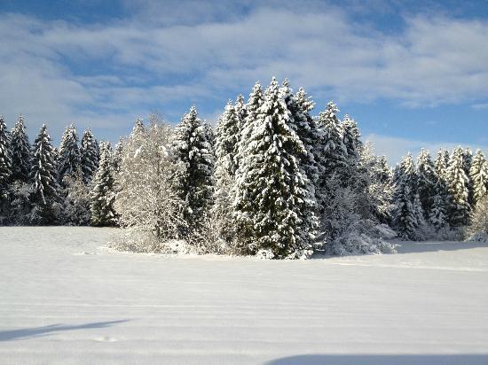 Landhotel zur Grenze: Winterwunderland