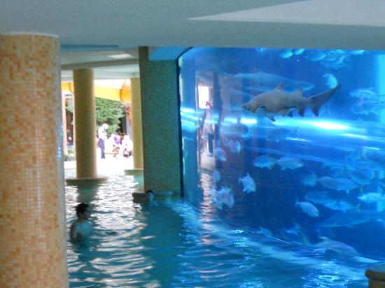 Golden Nugget Hotel : shark tank incorporated into pool area