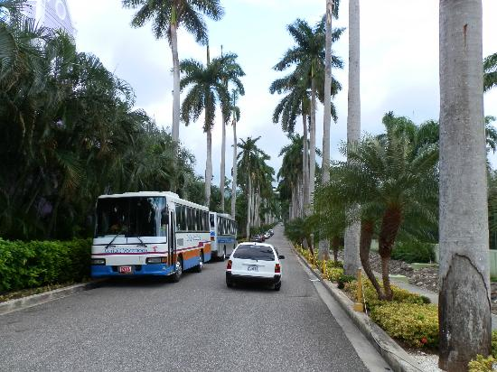 ClubHotel Riu Ocho Rios: nice long driveway entrance to the hotel