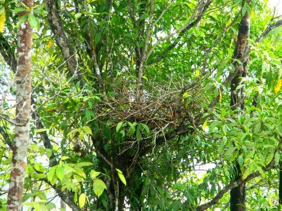 The Last Frontier Boutique Resort: An orangutan nest near the lodge