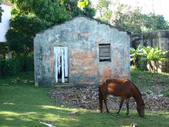 Grand Bahia Principe Cayacoa: Las Galeras