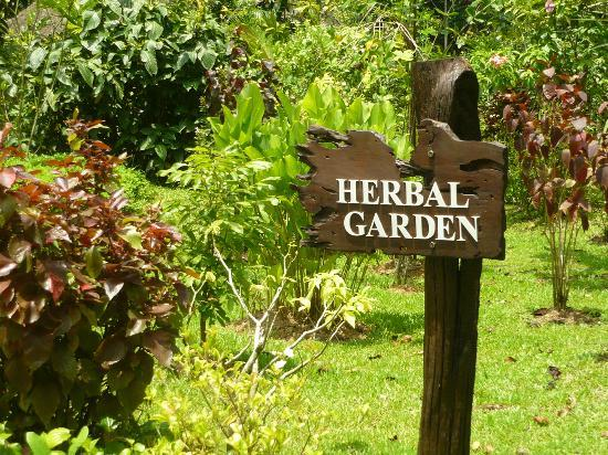 The Banjaran Hotsprings Retreat: Check out the Herbal Garden - with explanations of the various uses of the plants