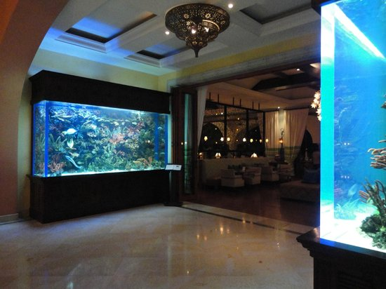 Hilton Los Cabos Beach & Golf Resort: Saltwater tanks between main lobby and restaurant/bar