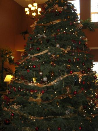 ‪‪La Quinta Inn & Suites Paso Robles‬: Lobby Tree