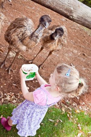 Solothurn Rural Resort: Emus
