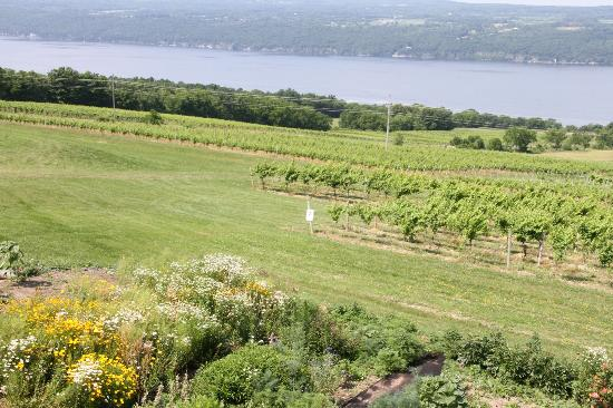 Atwater Estate Vineyards: The View
