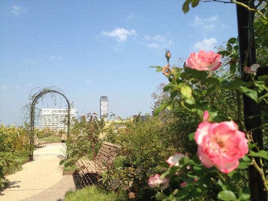 Hotel Harmonie Cinq: 屋上庭園