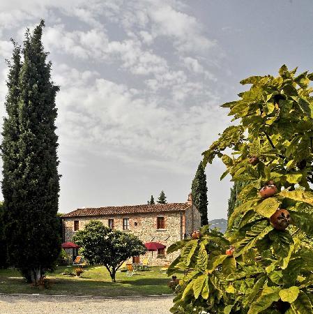 Agriturismo Vecchio Olivo
