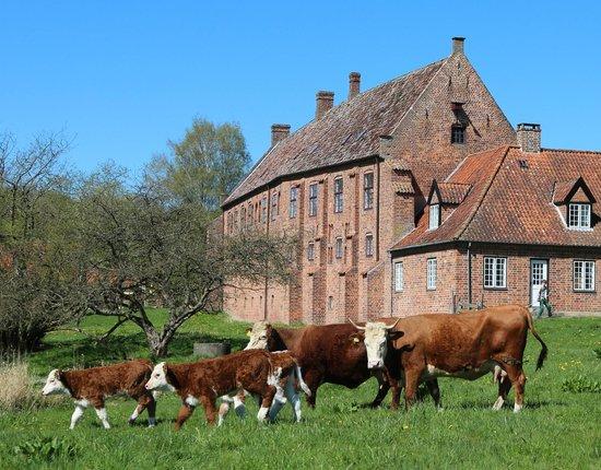 Esrum Kloster Og Mollegaard