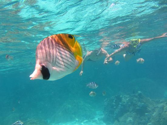 Bora Bora Photo Lagoon : Beautiful fish in crystal clear water!