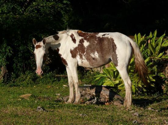 Hotel Hacienda Guachipelin: wannabe cowboys are welcome