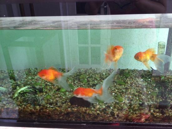 Spica Holiday Home: gold fish at front door