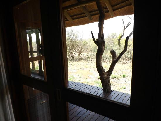Madikwe Safari Lodge: View from room