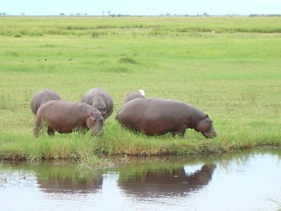 Cresta Mowana Safari Resort and Spa: Während der Fahrt entlang des Chobe-Flusses_2