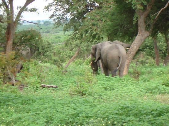 Cresta Mowana Safari Resort and Spa: Auf der Safari-Fahrt_4