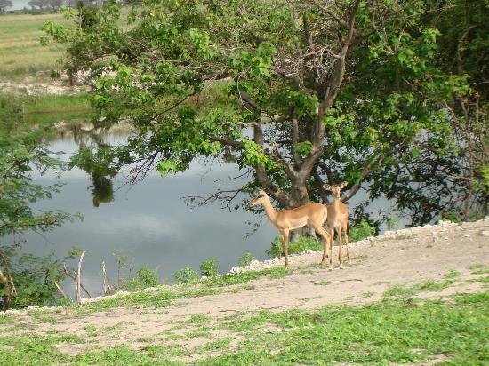 Cresta Mowana Safari Resort and Spa: Auf der Safari-Fahrt_6