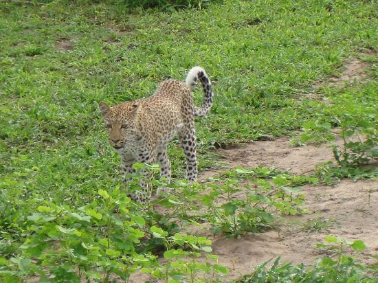 Cresta Mowana Safari Resort and Spa: Auf der Safari-Fahrt_7