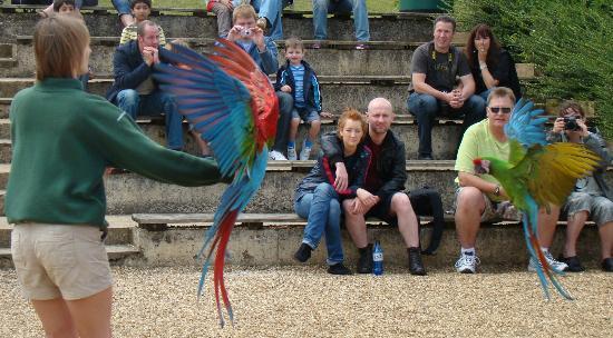 Woburn Safari Park: Birds