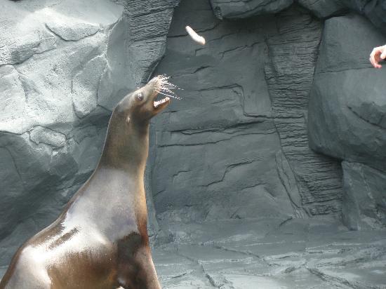 Woburn Safari Park: Seal