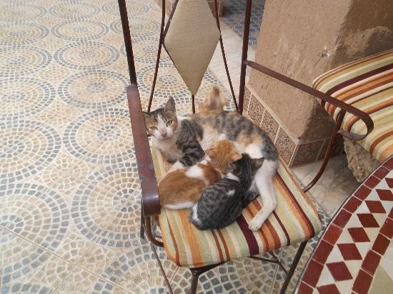 Nasser Palace Hotel & Bivouacs: Gatitos