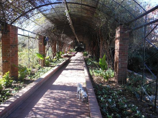 Clark Gardens Botanical Park: The Arbor
