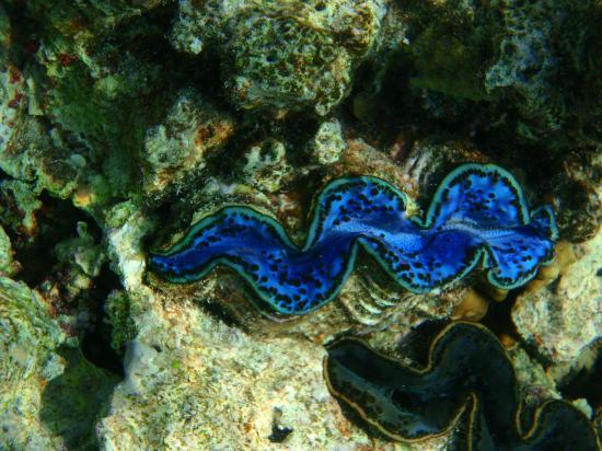 Faraana Reef Resort : coral reef