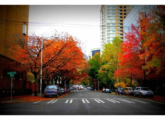 Kimpton Hotel Monaco Seattle: street