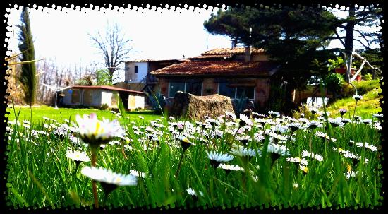 Podere Lupinaio: our home
