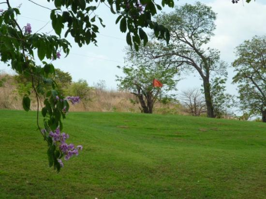 Papagayo Golf & Country Club : CAMPO
