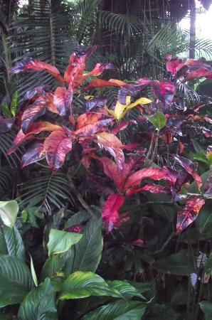 Hawaii Tropical Botanical Garden: Tropical foliage explodes