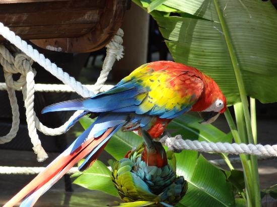 Sandos Caracol Eco Resort: one of the many macaws