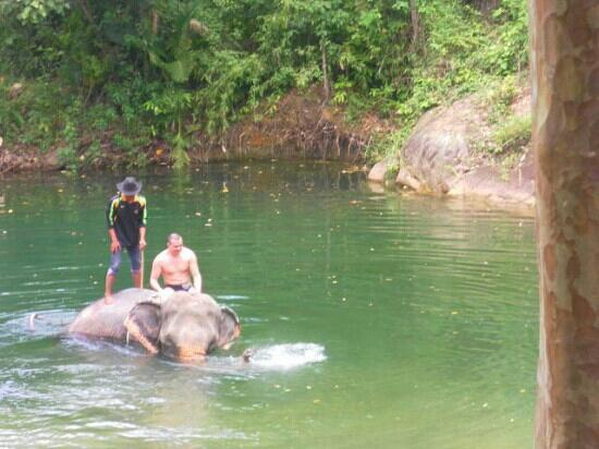 Kok Chang Safari Elephant Trekking: my travel