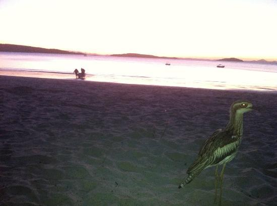 Svendsens Beach: late sundowners
