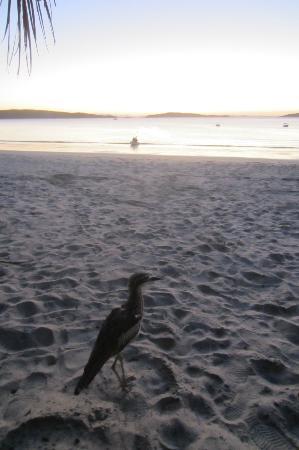 Svendsens Beach照片